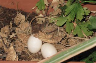eggs-small.jpg